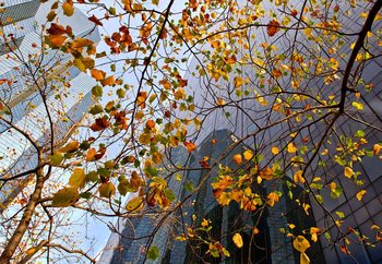 Autumn In The City Fotobehang