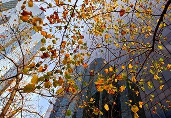 Autumn In The City Fotobehang