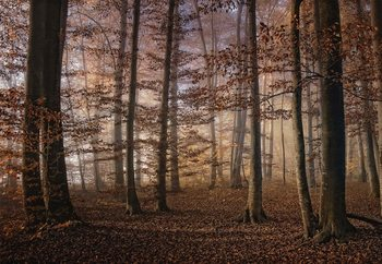 Autumn In The Forest Fotobehang