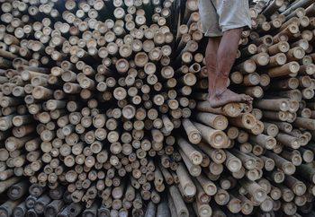 Bamboo Fotobehang