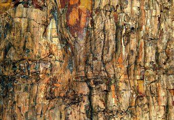 Bark Fotobehang