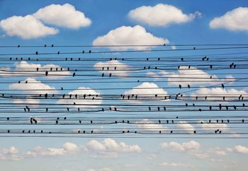 Cantus Arcticus, Concerto For Birds Fotobehang