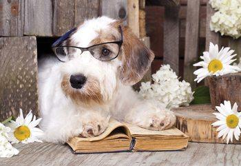 Clever Dog Fotobehang