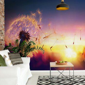 Dandelion Sunset Fotobehang