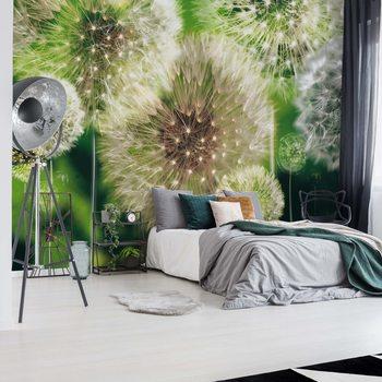 Dandelions Fotobehang