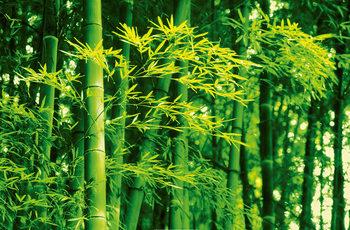 DAVE BRÜLLMANN - bamboo in spring Fotobehang