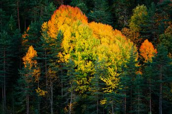 Fall colors trees Fotobehang
