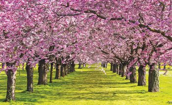 Flowering Trees Fotobehang