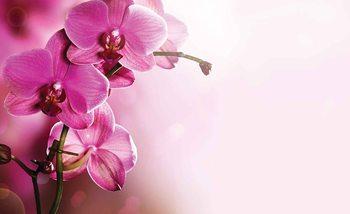 Flowers Fotobehang
