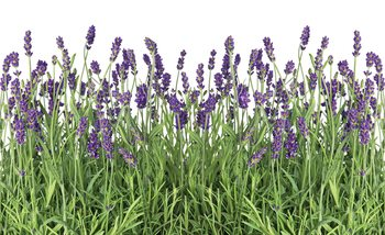 Flowers Lavender Fotobehang