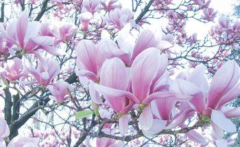 Flowers Magnolia Fotobehang