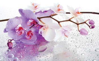 Flowers Orchids Nature Drops Fotobehang