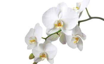 Flowers Orchids Nature White Fotobehang