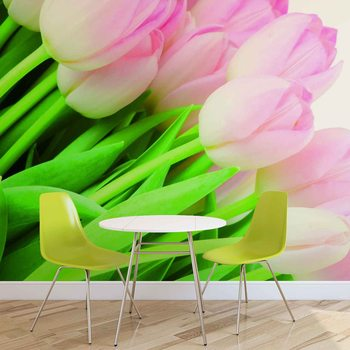 Flowers Tulips Nature Fotobehang