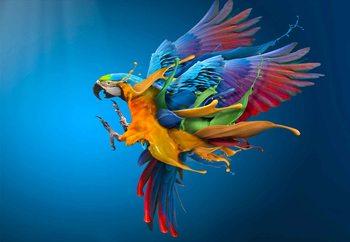 Flying Colours Fotobehang