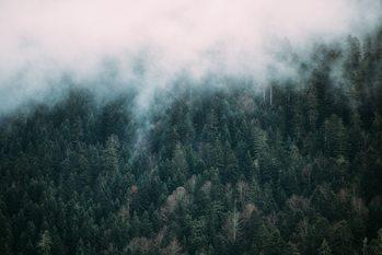 Fog over the forest Fotobehang