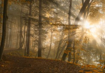 Forest Light Fotobehang