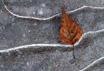 Frozen Leaf Fotobehang