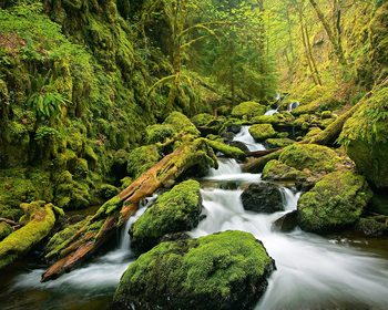 Green Canyon Cascades Fotobehang