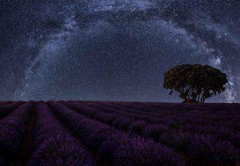 Lavender In Brihuega Fotobehang