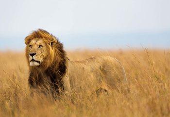 Lion Fotobehang