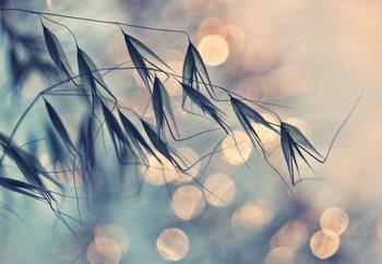 Macro Grass Fotobehang