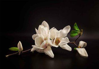 Magnolia Fotobehang
