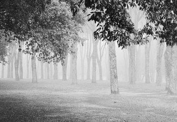 Morning Fog Fotobehang