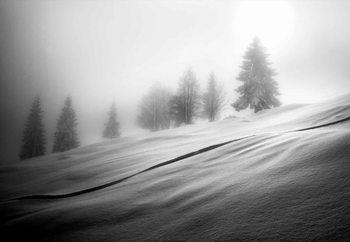 Mystic Trees Fotobehang