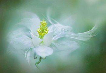 Mystical Fotobehang