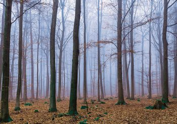 Nature Wood Forest Fotobehang