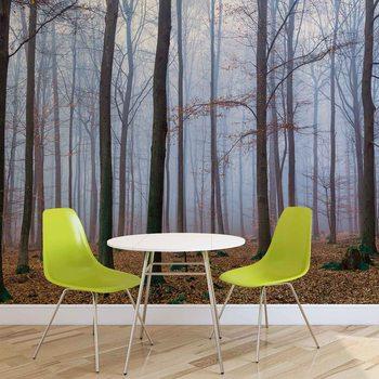 Nature Wood Forest Fotobehang