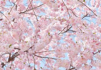 Pink Blossoms Fotobehang