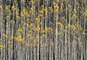 Rhythm Of Forest Fotobehang