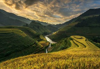 Rice Terrace In Vietnam Fotobehang