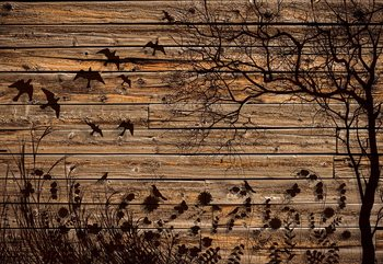 Rustic Birds And Tree Silhouette Wood Plank Texture Fotobehang