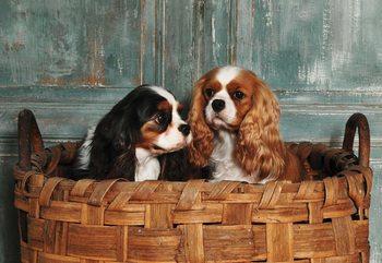 Spaniel Dogs Fotobehang