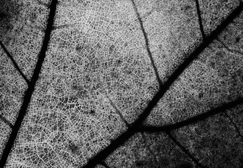 Streets Fotobehang