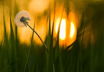 Sunbathing Fotobehang