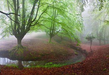 The Forest Maravillador Fotobehang
