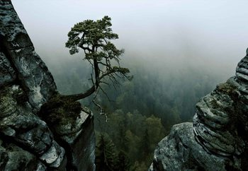 The Lonely Tree In The Cliff Fotobehang
