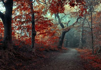 The Red Forest Fotobehang