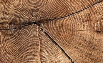 Tree Stump Rings Fotobehang