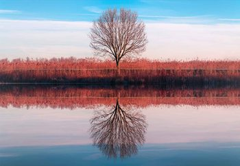Windtree Fotobehang