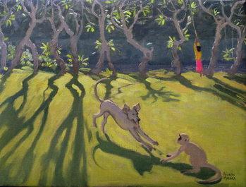 Reprodukcja Dog and Monkey, Sri Lanka,1998