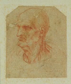 Reprodukcja Head of a beardless old man, left profile