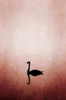 Ilustracja Swan Lake