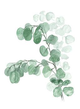 Ilustracja Watercolor silver dollar eucalyptus