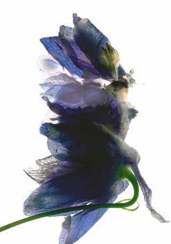 Reprodukcja Delphinium Dance, 2009,
