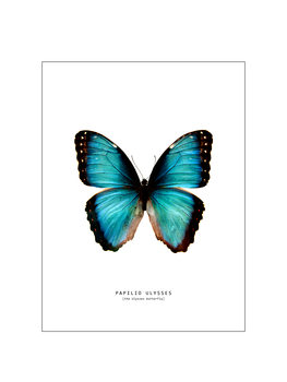 Illustrazione butterfly